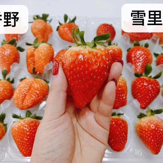 平谷天香草莓苗基地新报价