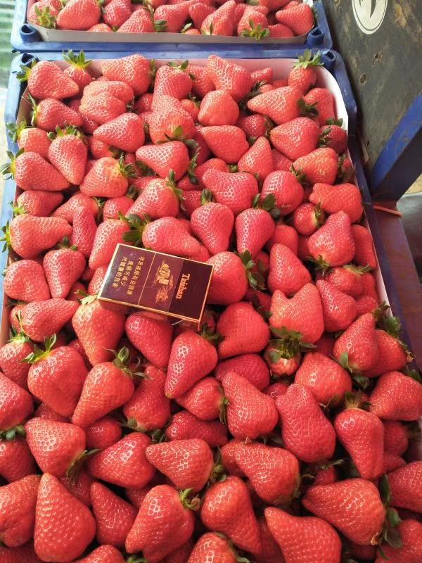 乌海红颊草莓苗便宜价格