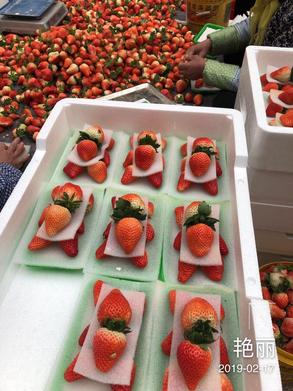 平谷天香草莓苗便宜出售
