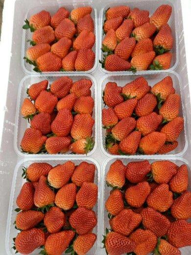 平谷童子一号草莓苗咨询来电