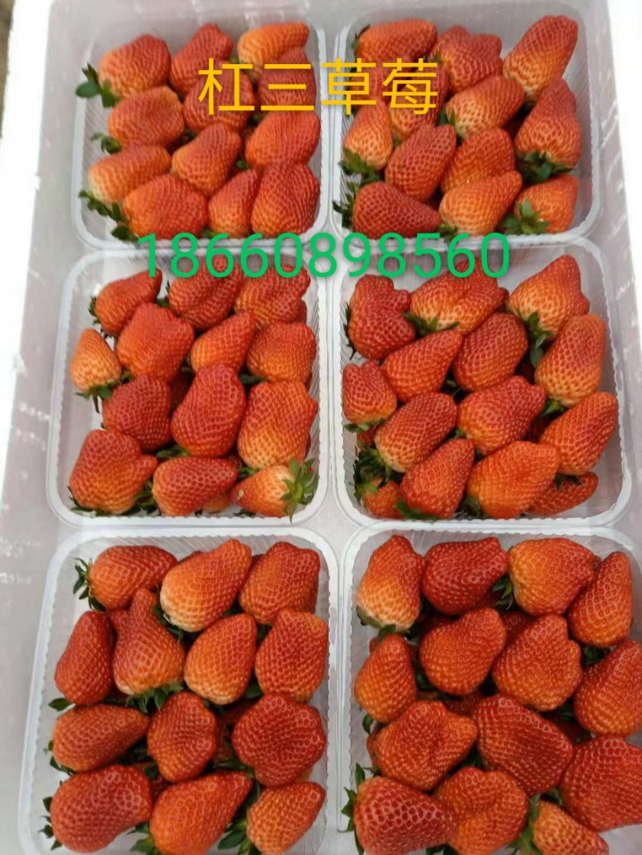 平谷明宝草莓苗价格