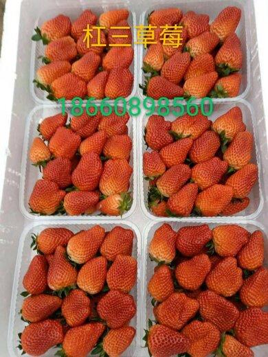 乌海夏秋草莓苗出售