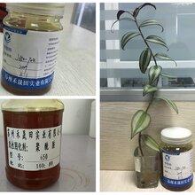 高性能650聚酰胺固化剂优质固化剂苏州亨思特环氧固化剂公司