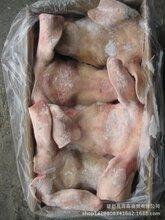 进口猪头,智利07-03厂,带耳朵和口条,出成率高,最新日期,冷冻猪头