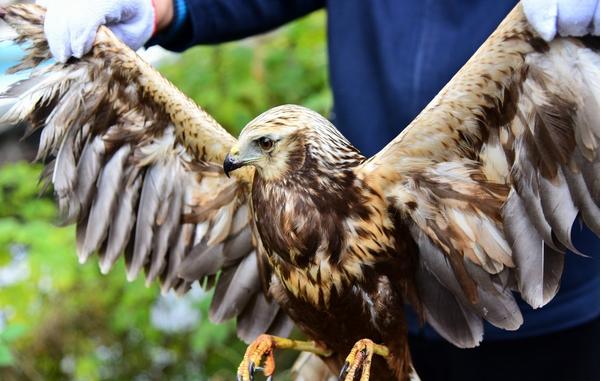 有市民向郑州市野生动物救护站送一只罕见的大鸟