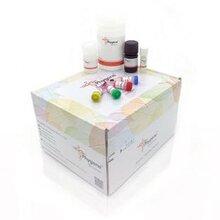飞净Phygene细菌基因组DNA提取试剂盒(BacterialGenomicDNAExtractionKit)