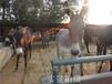 南充市德州驴,佳米驴,新疆驴,乌头驴养殖技术