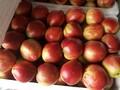 今日油桃价格-大棚油桃市场报价行情图片