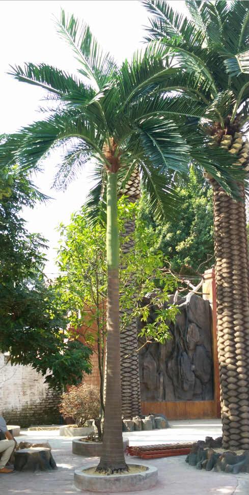 仿真槟榔树,假槟榔树,人造槟榔树