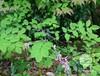 优质灌木种子,常绿灌木,落叶灌木种子批发市场,2015年灌木种子价格