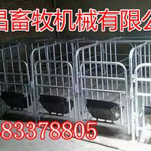畜牧业设备供应厂家母猪定位栏图片