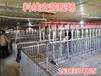 新型猪场设计自动喂料系统厂家