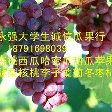 陕西红提葡萄批发红提葡萄行情红提葡萄基地价格图片