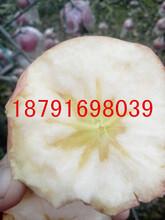 陜西紅富士蘋果出售紅富士蘋果多錢一斤紅富士蘋果基地圖片