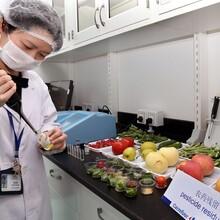 深圳农产品安全无公害认证检测农产品农残检测服务