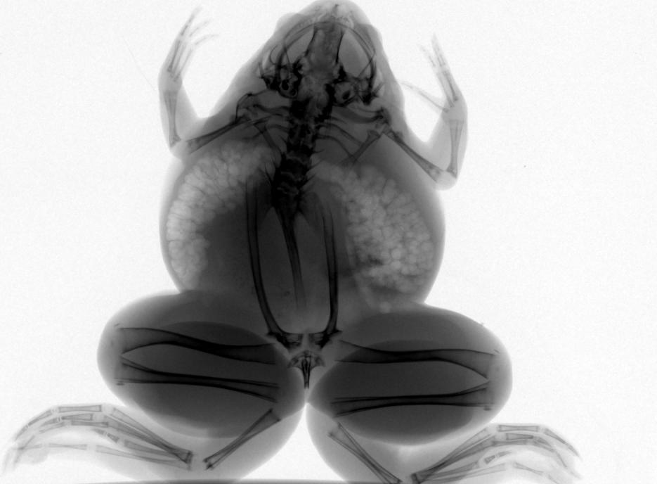 小动物活体成像系统,小动物x光机,小动物x射线成像系统