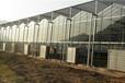 陕西杨凌雨丰温室大棚Venlo-9.6智能玻璃温室