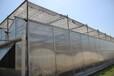 陕西杨凌雨丰温室大棚PC阳光板智能温室大棚