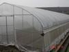 供应陕西杨凌雨丰温室大棚GP-625草莓单体温室大棚