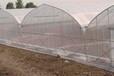 供应杨凌雨丰温室大棚GP-8430连栋薄膜蔬菜温室大棚