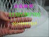 开封果树防鸟网,鸟网规格全价格低厂家直销