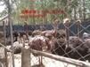 丽水市云和县珍禽养殖场珍禽图片