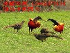 伊犁哈萨克自治州巩留县山东鸵鸟鸳鸯市场前景养殖规模最大