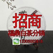 2016年茶叶福鼎白茶分销微商代理招商原产地厂家直销