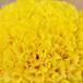 天然单级饲料着色剂绿川供应饲料级叶黄素粉末50%
