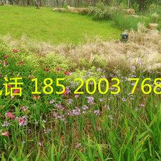 广州绿化工程