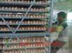 西安土鸡苗供应西安土鸡苗孵化场西安正宗土鸡苗