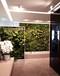建造垂直绿化室内植物墙的注意事项