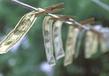 坚固环球开户外汇可以调杠杆吗、出入金是美元还是人民币?