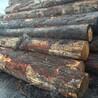 建筑木材加工、奥松、花旗松、铁衫、白松、原木订购销售