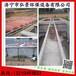雞糞軟體沼氣池沼氣集中收集產氣發電工藝