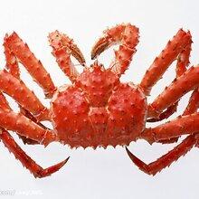 青岛进口海产品清关需要什么资料