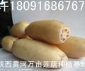 四川成都莲藕蔬菜批发市场价格,重庆哪里有炖的耙烂面藕汤清