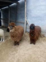 羊驼养殖场