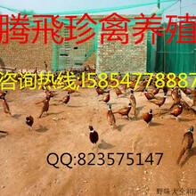 养殖场出售孔雀,鸵鸟