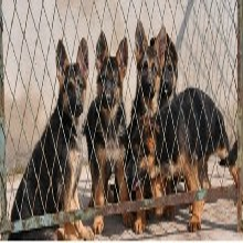 贵阳哪里有卖德牧幼犬贵阳哪里有卖纯种德牧幼犬