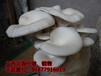 代做蘑菇菌包原料包食用菌包,平菇菌包,量大订制