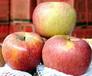 昭通丑苹果