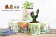 ECOEY蔬果乐园新奇罐装小盆栽创意亲子手工DIY绿植礼物批发