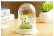 ECOEY创意绿植礼品微景观多肉植物室内防辐射小盆栽欧美建筑摆件