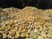 黄蜡石嫌贵别找民顺,民顺只售高质量的黄蜡石假山石