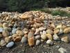 河南许昌白兔寺附近的黄蜡石假山石石从哪里来的