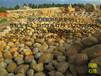 江苏盐城有限时售卖高品质黄蜡石假山石等多种园林石材