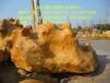 黄山黄蜡石、没有你想的高价、景观石场给你一个惊喜