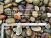 江苏泰州书记现场推荐黄蜡石在哪的?还有什么其他的园林石材