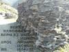 民营自主经营黄蜡石、农民伯伯的泰山石